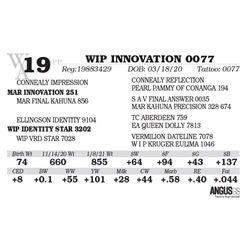 WIP INNOVATION 0077