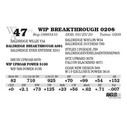 WIP BREAKTHROUGH 0208