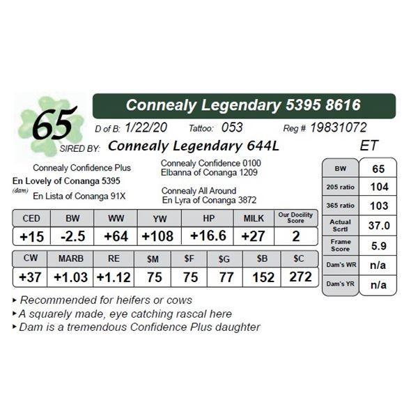 Connealy Legendary 5395 8616