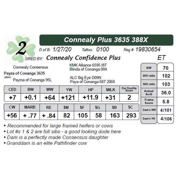 Connealy Plus 3635 388X