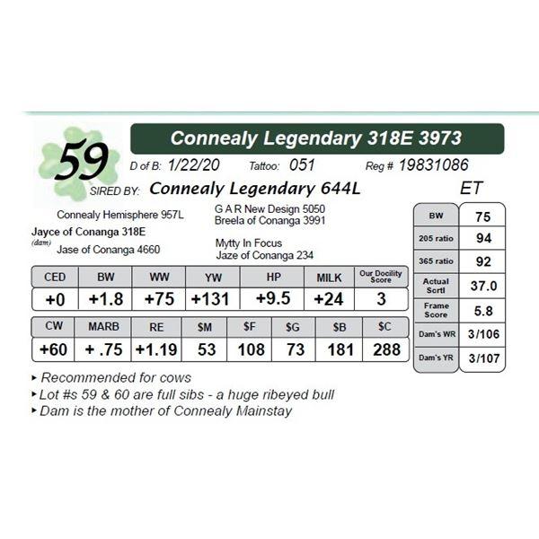 Connealy Legendary 318E 3973