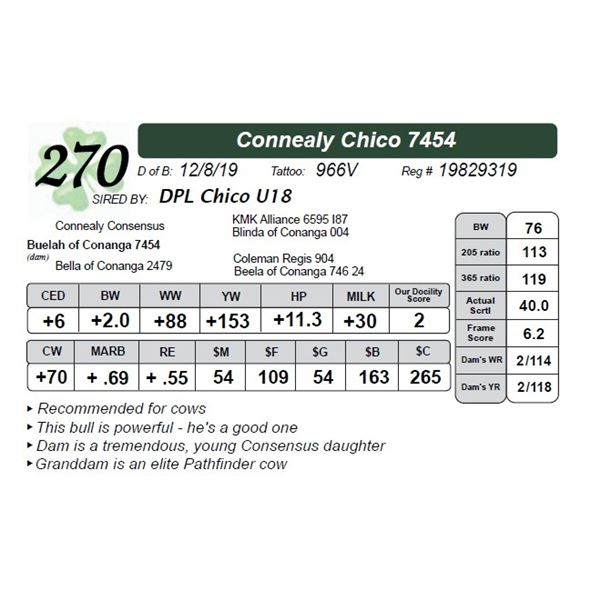 Connealy Chico 7454