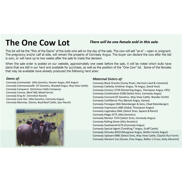 The One Cow Lot
