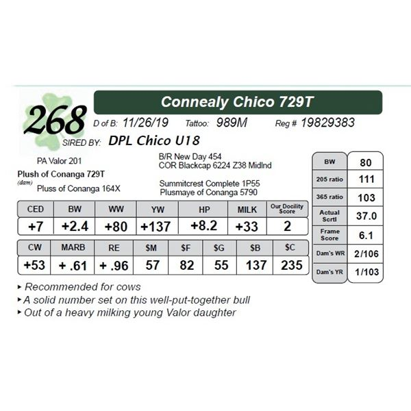 Connealy Chico 729T