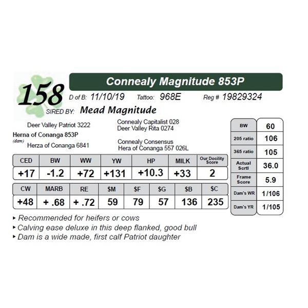 Connealy Magnitude 853P