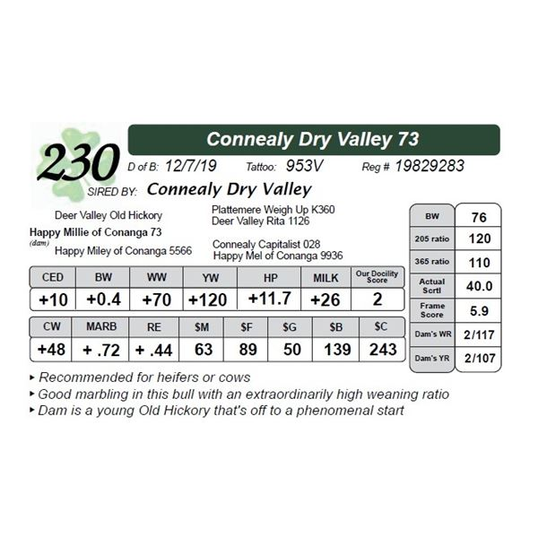 Connealy Dry Valley 73