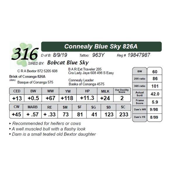 Connealy Blue Sky 826A
