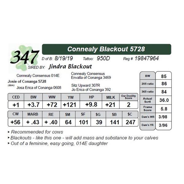 Connealy Blackout 5728