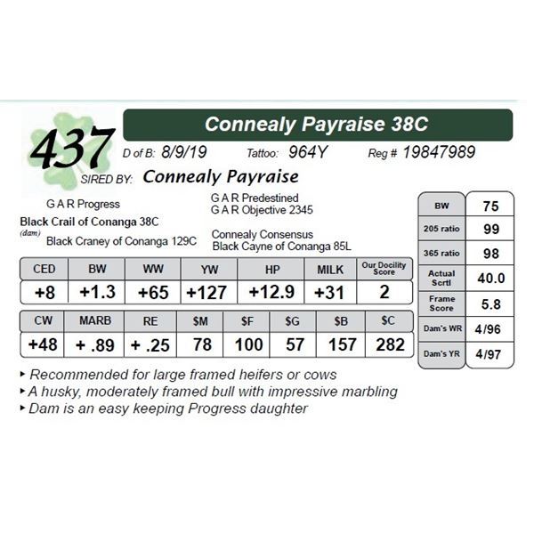 Connealy Payraise 38C