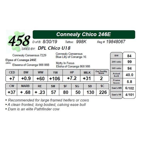 Connealy Chico 246E