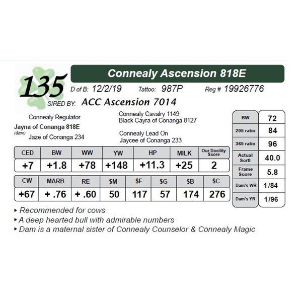 Connealy Ascension 818E