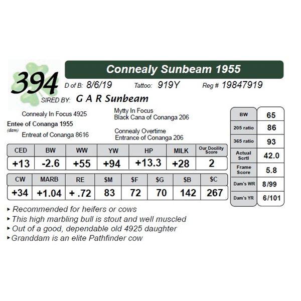 Connealy Sunbeam 1955