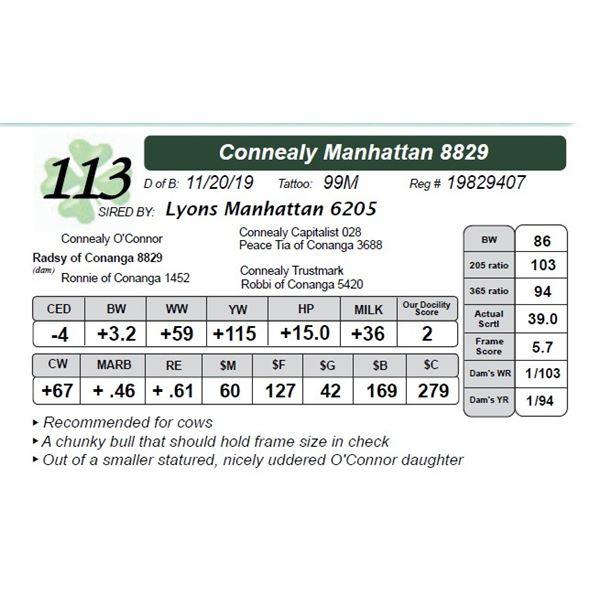 Connealy Manhattan 8829