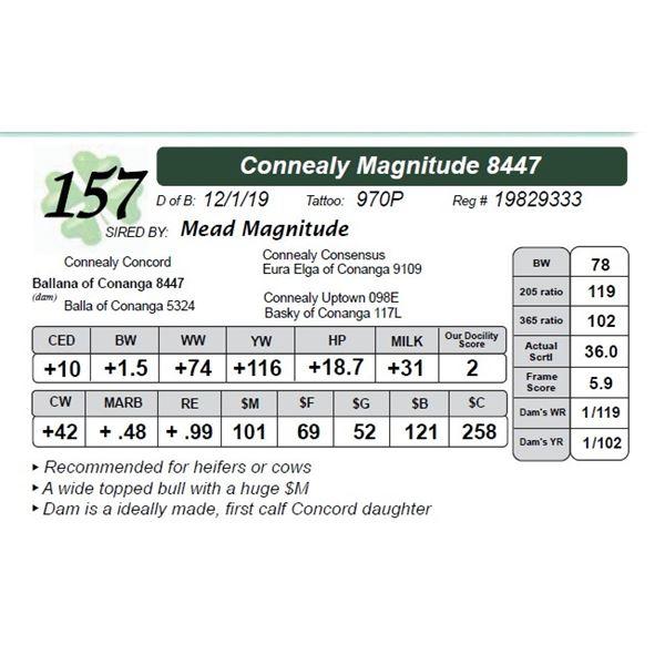 Connealy Magnitude 8447