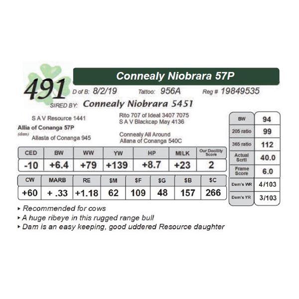 Connealy Niobrara 57P