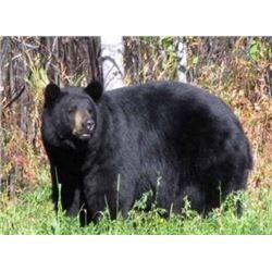 Bear Hunt in Ontario, Canada