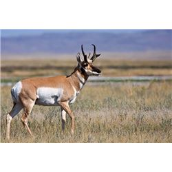 Wyoming Rifle Antelope Hunt at Pronghorn Ranch for (1) Hunter