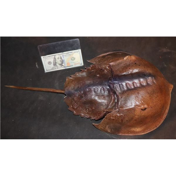 ZZ-CLEARANCE CRABS MUTANT HORSESHOE CRAB HERO SILICONE HAND PUPPET SCREEN MATCHED
