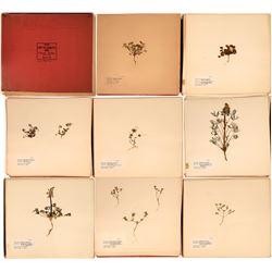 Herbarium Collection  [127780]