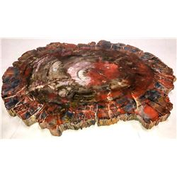 Arizona Polished Multi-Color Petrified Wood Slab  [131254]