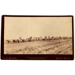Mule Train Hauling Ore of the Congress Mining Co., Original Photo, c1892-5  [126926]