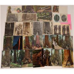 Yosemite National Park, California Postcards ~ 30  [129025]