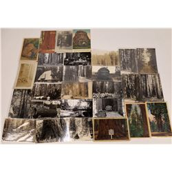 Redwood Forest, California Postcards ~ 6 Color; 20 RPCs, 2 B&W  [129027]