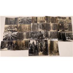 Redwood Highway Post Cards.  [122406]