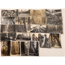 Redwoods Highway Photo Postcards  [122407]