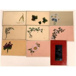 Artistic Series of Flowers Postcards   [128375]