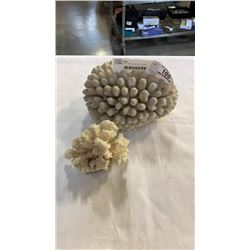 LARGE AND SMALL PIECE OF CORAL
