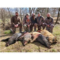 Oklahoma Hog Hunt