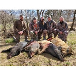 Oklahoma Hog Hunt