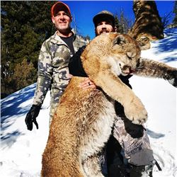Wyoming Mountain Lion Hunt
