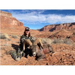 Navajo Nation Desert Bighorn Tag