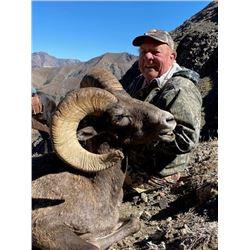 Wyoming Governor's Bighorn Sheep Tag