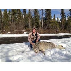 7 Day Alaska Wolf and Predator Hunt
