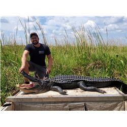 Louisiana Alligator Hunt