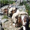 Image 1 : Wyoming Summer Pack Trip