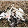 Image 1 : North Dakota Duck & Goose for 2