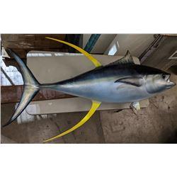 76  Yellowfin Tuna