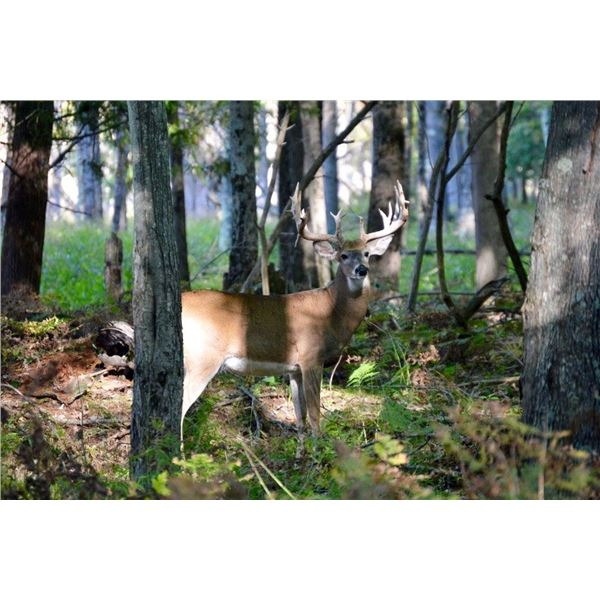 """3 Day Whitetail Buck up to 145"""" for One Hunter and One Non-hunter"""