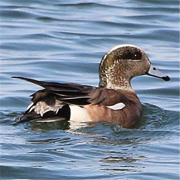 4 Day/4 Six Duck & 5 Geese/Person/Day Hunt for Two Hunters (2x6)