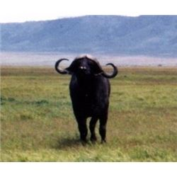 Makhulu Safaris – choice of Buffalo Cow, Golden Wildebeest, Springbuck Grand Slam or Blesbuck Grand