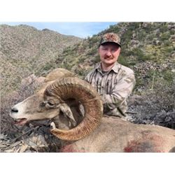 High Fence Desert Sheep Hunt from Coues Outfitters