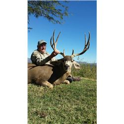 "Fully Guided Mule Deer Hunts 170"" plus in Mexico  for 1 Hunter"