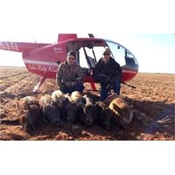 Helicopter Hog Hunt in Texas