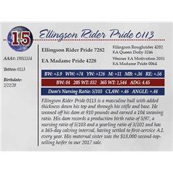 ELLINGSON RIDER PRIDE 0113