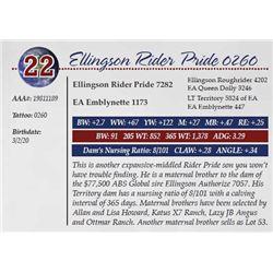 ELLINGSON RIDER PRIDE 0260