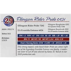 ELLINGSON RIDER PRIDE 0431